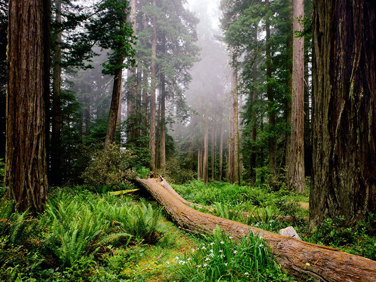 Redwood National Park, California, United States